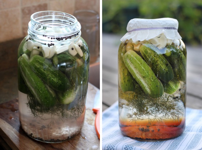 Fermented Dill Pickles Recipe
