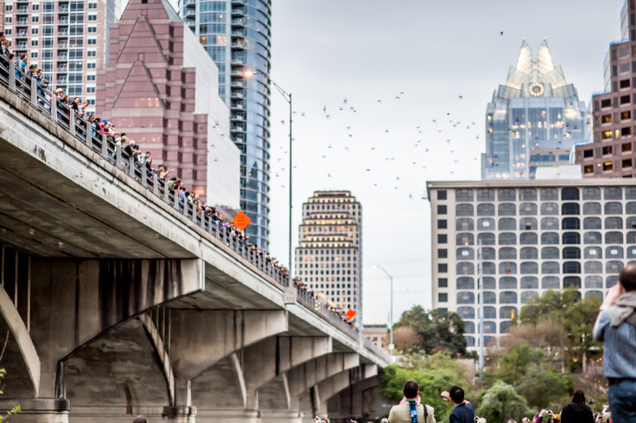 Austin Bats Congress St Bridge