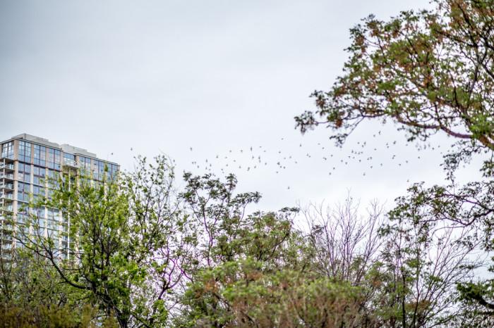Austin Bat Swarm