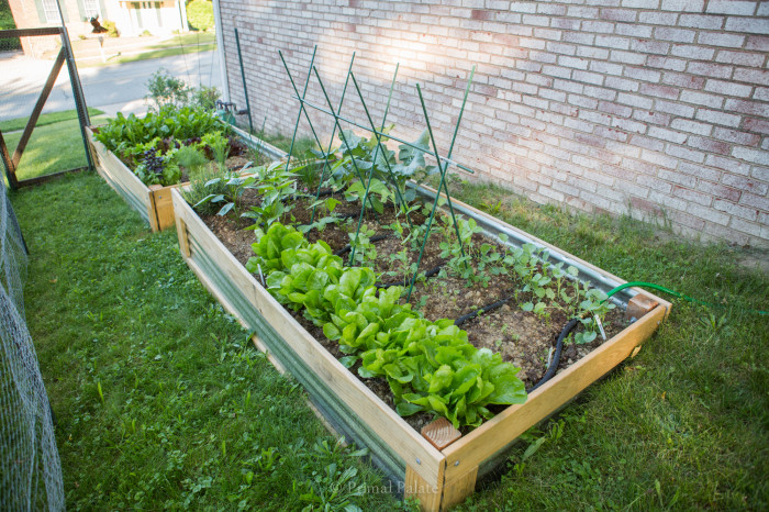 Permaculture Gardening-2