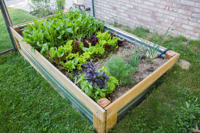 Permaculture Gardening-7