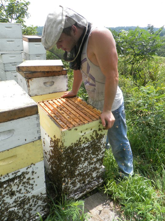 beehives in northeast iowa 2
