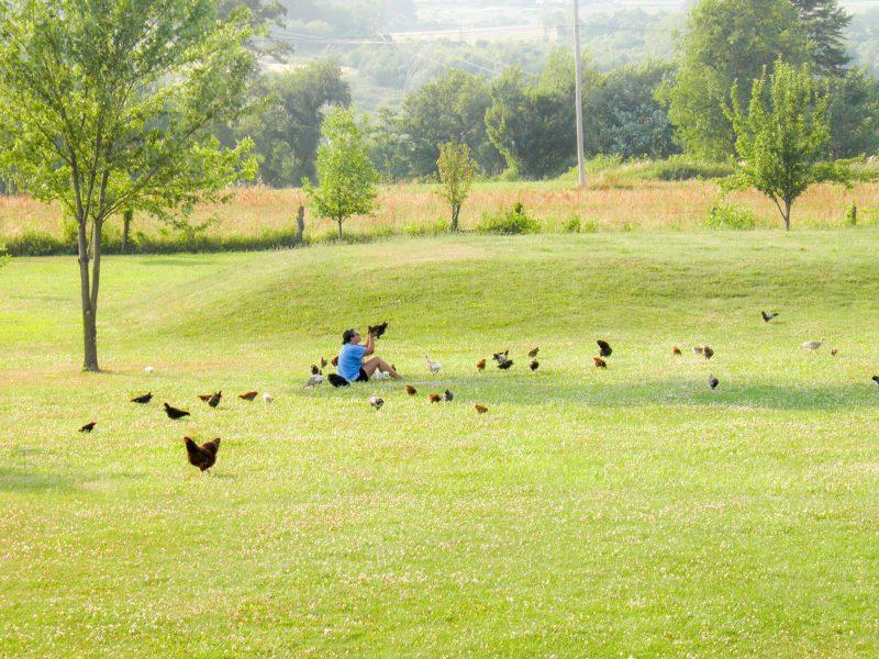Homesteading - Raising Chickens