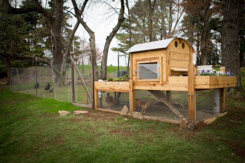beautifully designed chicken coop and run