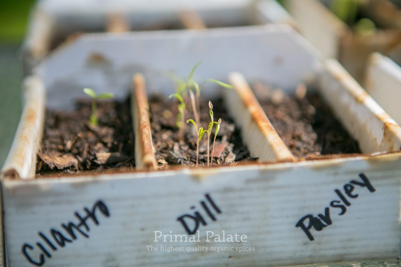 Primal Palate Organic Spices - Seed Starter Boxes-4