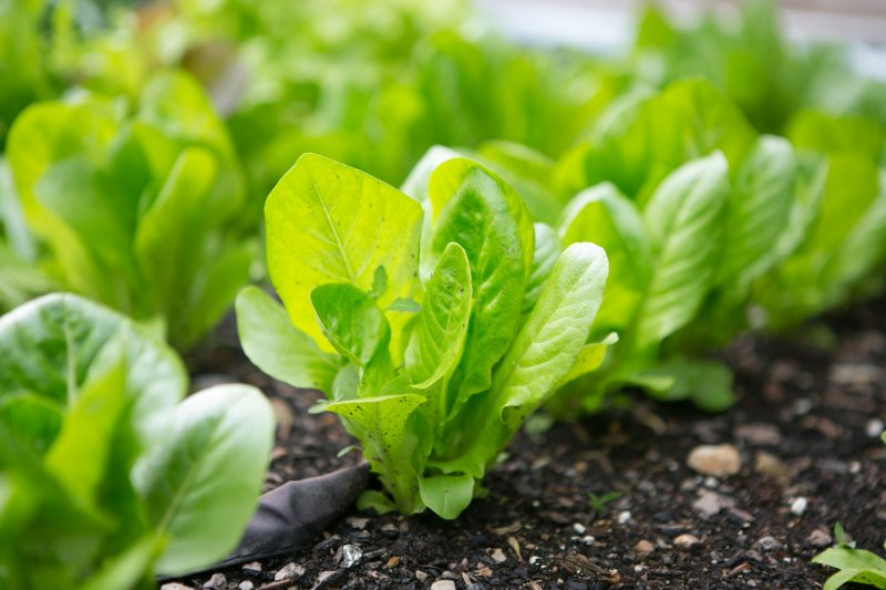 paleo organic gardening - primal palate-1