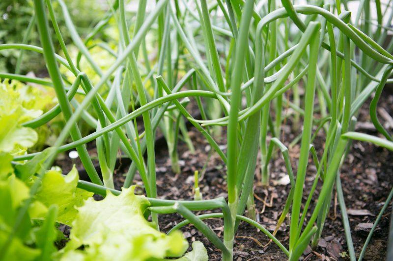 paleo organic gardening - primal palate-3