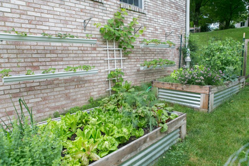 How To Make Gutter Planters For Strawberries Primal
